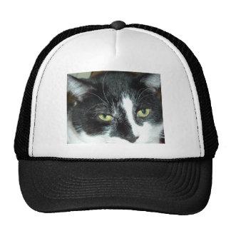 Gato blanco y negro del smoking gorro de camionero