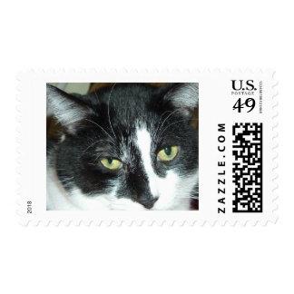 Gato blanco y negro del smoking franqueo