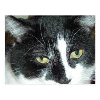 Gato blanco y negro del smoking tarjeta postal