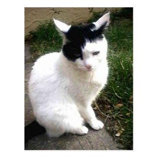 Gato blanco y negro dulce bonito del gatito tarjetas postales