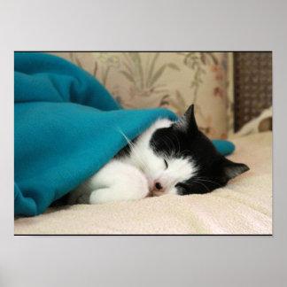 Gato blanco y negro el dormir con la manta azul póster