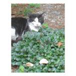 Gato blanco y negro en verdor membrete