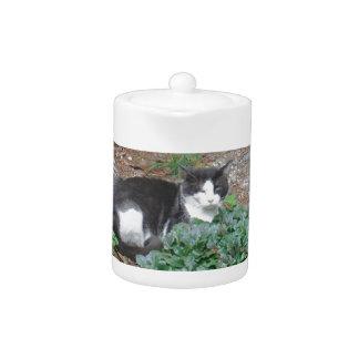 Gato blanco y negro en verdor