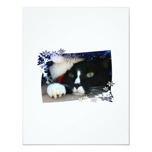 Gato blanco y negro, gorra de santa, malla y una anuncio