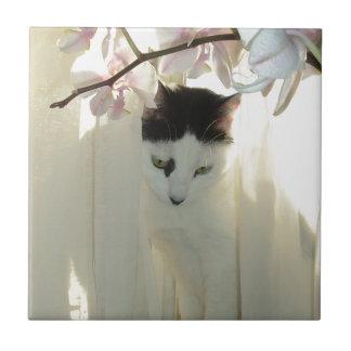 Gato blanco y negro hermoso azulejo cuadrado pequeño