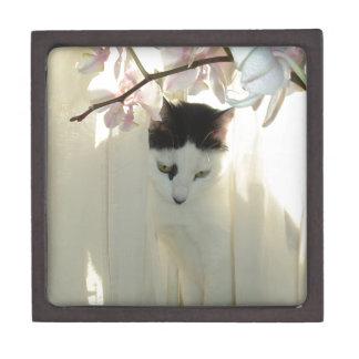 Gato blanco y negro hermoso cajas de recuerdo de calidad