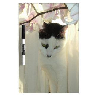 Gato blanco y negro hermoso pizarra blanca