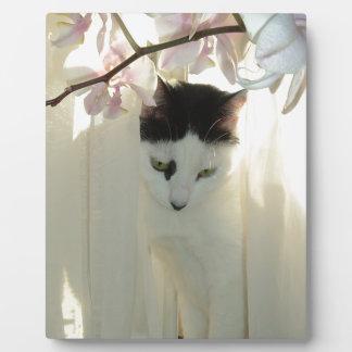 Gato blanco y negro hermoso placa para mostrar