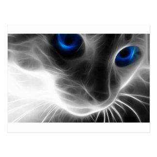 Gato blanco y negro observado azul del gatito tarjetas postales