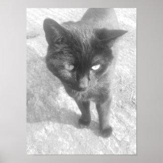 Gato blanco y negro poster