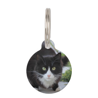 Gato blanco y negro placas de mascota