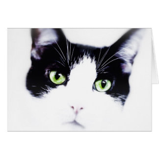 Gato blanco y negro tarjeta de felicitación