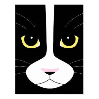 Gato blanco y negro tarjetas postales