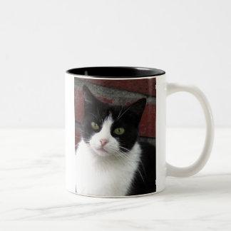 gato blanco y negro taza de dos tonos