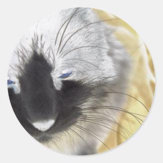 Gato blanco y negro único pegatina redonda