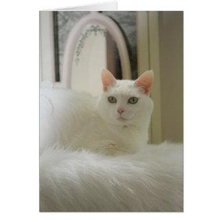 Gato bonito tarjetas