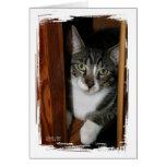 Gato Brindled y blanco enmarcado en madera Felicitacion