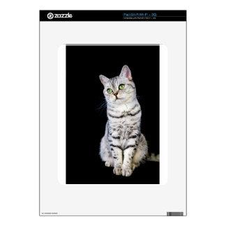 Gato británico adulto del pelo corto en fondo calcomanías para el iPad