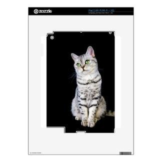 Gato británico adulto del pelo corto en fondo calcomanías para iPad 2