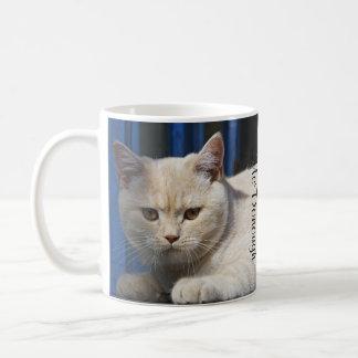 Gato británico de Shorthair Taza Clásica