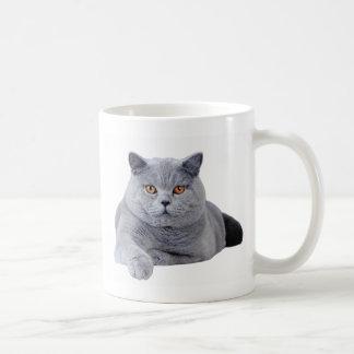 Gato británico del shorthair taza