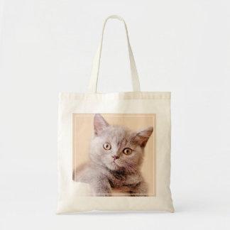 Gato británico lindo de Shorthair