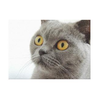 Gato británico lindo de Shorthair Lienzo Envuelto Para Galerías