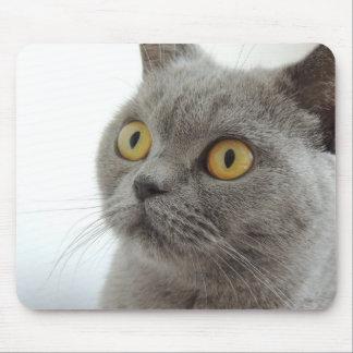 Gato británico lindo de Shorthair Alfombrillas De Ratones
