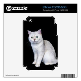 Gato británico sombreado plata negra del pelo iPhone 3 skin