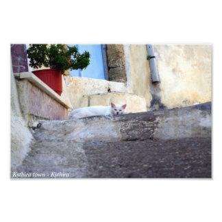 Gato callejero blanco fotos