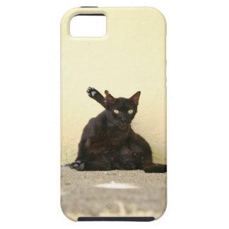 Gato callejero funda para iPhone 5 tough