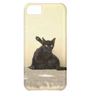 Gato callejero funda para iPhone 5C