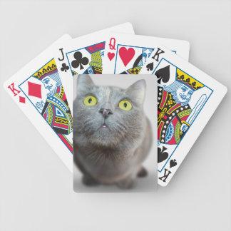 gato barajas de cartas