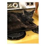 Gato cocido postal
