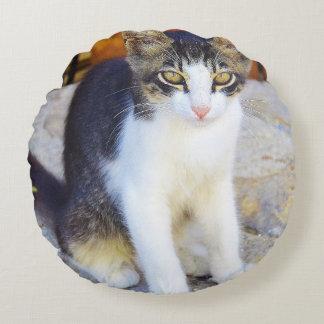 gato cojín redondo