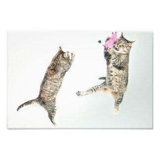gato cojinete