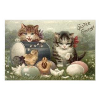 Gato coloreado polluelo del gatito del huevo de Pa Fotografía
