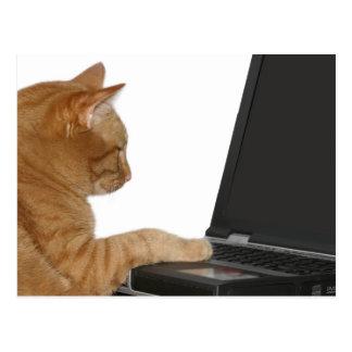 Gato computacional postal