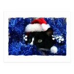 Gato con el gorra de santa que mira hacia fuera de postal