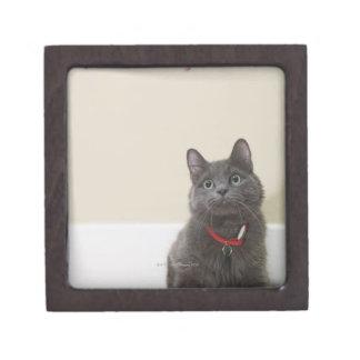 Gato con el juguete caja de regalo de calidad
