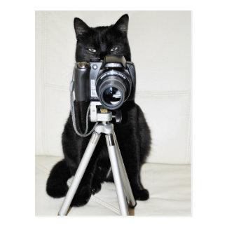 Gato con la cámara postales
