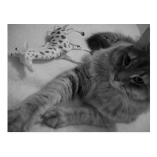gato con la postal de la jirafa del juguete