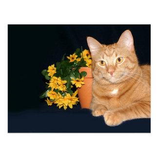 Gato con las flores postal