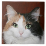 Gato con las pestañas tejas  cerámicas