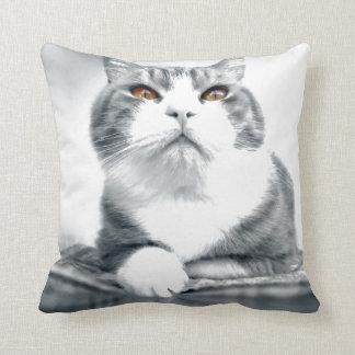 Gato con los ojos anaranjados del poder almohada