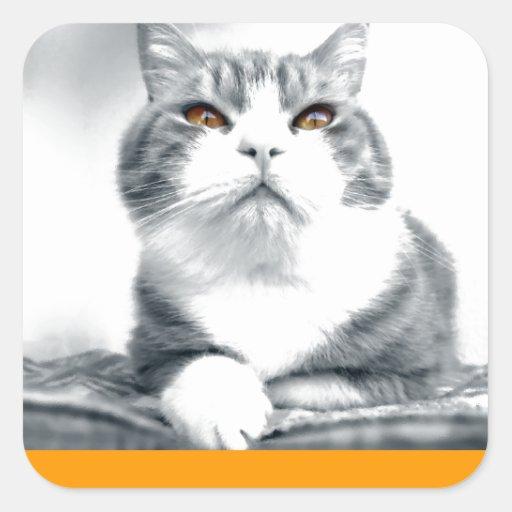 Gato con los ojos anaranjados del poder pegatina cuadrada
