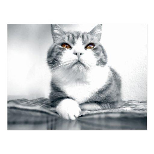 Gato con los ojos anaranjados del poder tarjeta postal