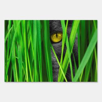 Gato con los ojos de la hoja y del Special Señal