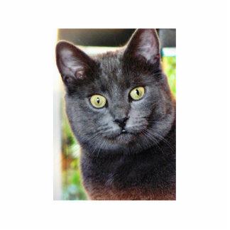 Gato con los ojos que miran fijamente esculturas fotográficas