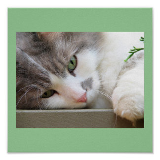 Gato con los ojos verdes poster